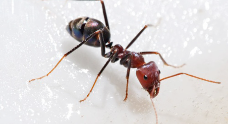 ants_featured