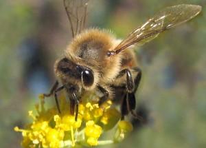 Bilinçli bir Yaratıcı olmadan arının bu bilgileri kendi kendine tesadüfen elde etmesi hiç mümkün olabilir mi ?